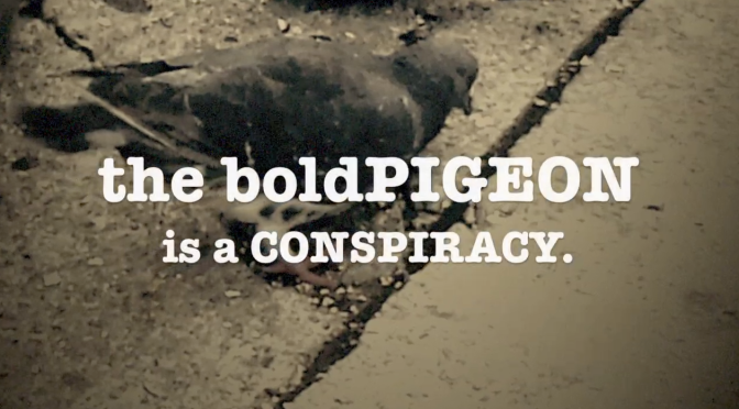 THE boldPIGEON is a CONSPIRACY.